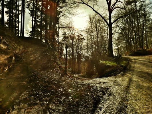 SilvesterTrail im Weisshauswald – ein letzter Lauf.