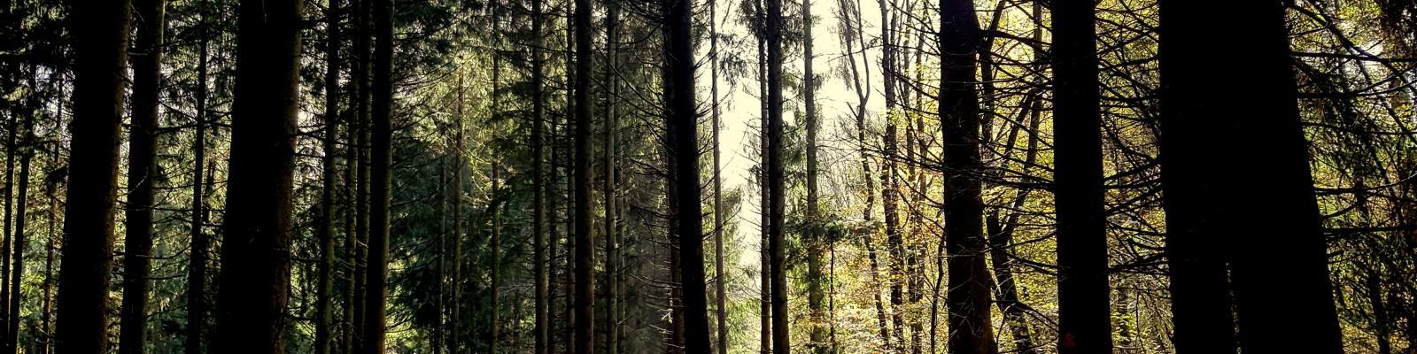 Saarschleife-Trail die Zweite